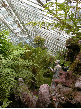 Inside the sunken Fernery