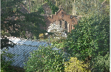 View across the Fernery to the stables ruin